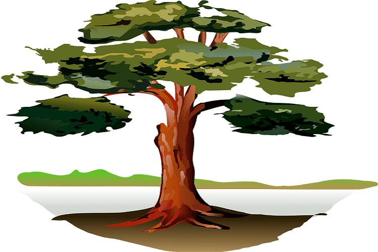 Haughty Oak Tree