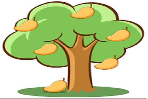The Ugly Mango Tree